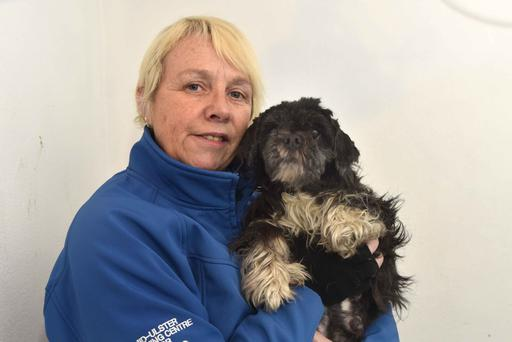 Colleen Cunningham, manager of the Mid Ulster Rehoming Centre For Dogs, with the animal