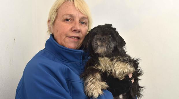 Seeking a home - tiny puppies born to an abandoned Shih Tzu mother