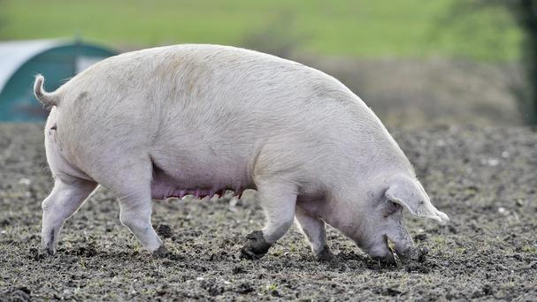Northern Ireland is set to export pork to China