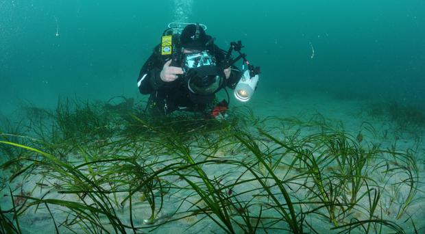 Photographing seagrass at Waterfoot