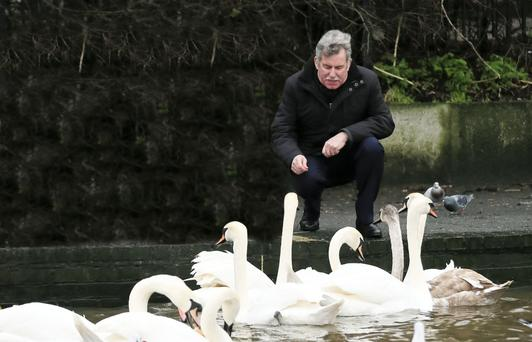 Alban Maginness feeds the swans at the Waterworks in Belfast