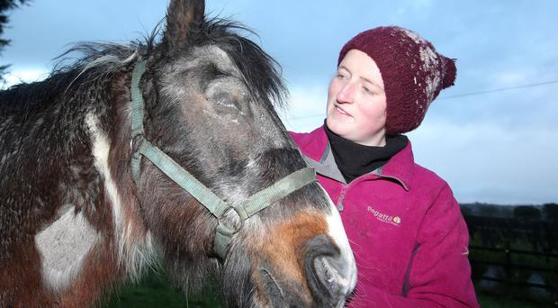 Mojo with Samantha Philips at Crosskennan Animal Sanctuary yesterday