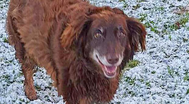 Getting on great: Fudge the dog has a new home