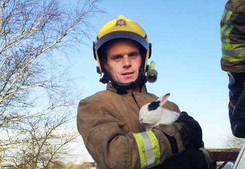 A firefighter rescues Bumper from the rooftop in Omagh yesterday