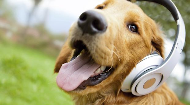 Our canine pals can have their moods influenced by music