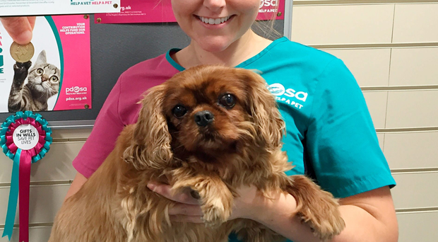 Lady with PDSA nurse Gemma