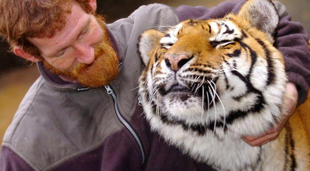 Norman Elder with tiger Sonya at the Wildlife NI premises