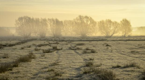 Mist surrounds trees and frosty grass after sunrise near Glastonbury