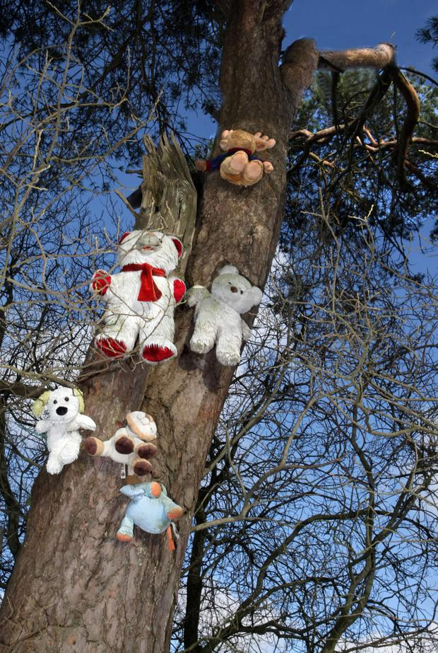 The soft toys nailed to trees are attracting an increasing number of visitors
