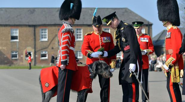 William presents a sprig of shamrock to the Irish Guards' regimental mascot, an Irish wolfhound named Domhnall (MoD/PA)