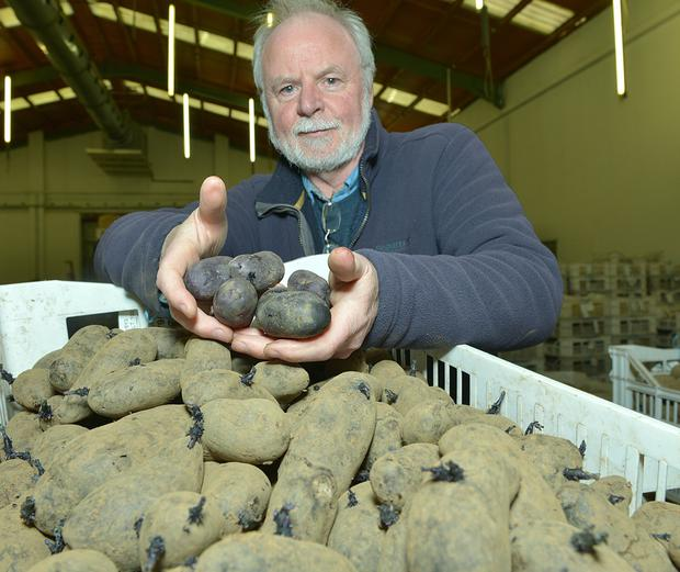 Paul Watts, potato breeder with the Agri-Food and Biosciences Institute, with the potatoes which are purple inside too