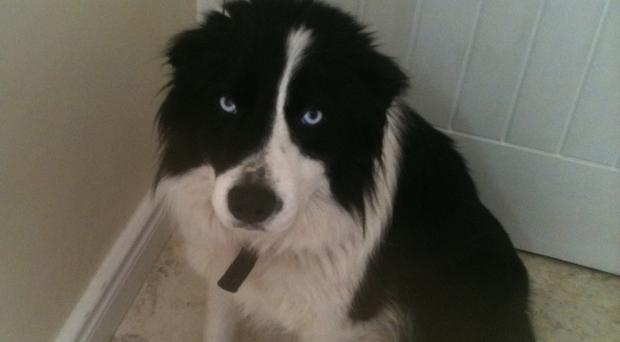 Cody was set alight in Co Antrim in 2012, suffering extensive burns and dying days later