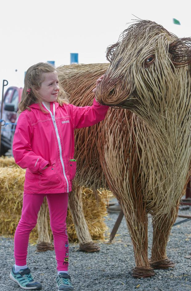 Annie Spratt (7) from Crossgar checks out the life-size Irish Moiled bull, the latest work by the Ulster Folk & Transport Museum's award-winning willow sculptor and basket maker Bob Johnston