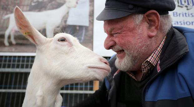 Stefan Smyth pictured in the goat section ahead of the Balmoral Show in association with Ulster Bank. Pic Steven McAuley