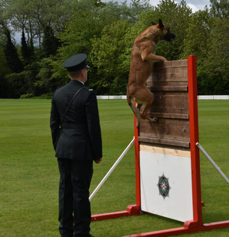 The 56th National Police Dog Trials took place at Stormont Pavilion yesterday