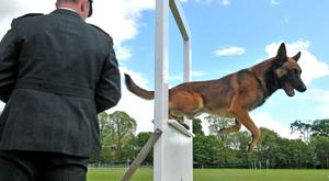 PSNI dog Mike was crowned winner