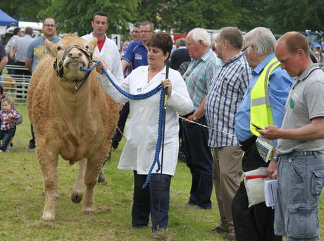Ruth McElroy with her blonde cow at the Lurgan Show