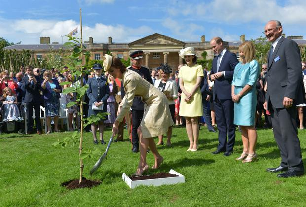 The royal couple planting a tree during the event