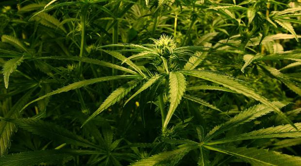 A 43-year-old man has been arrested following the seizure of herbal cannabis worth an estimated £75,000.
