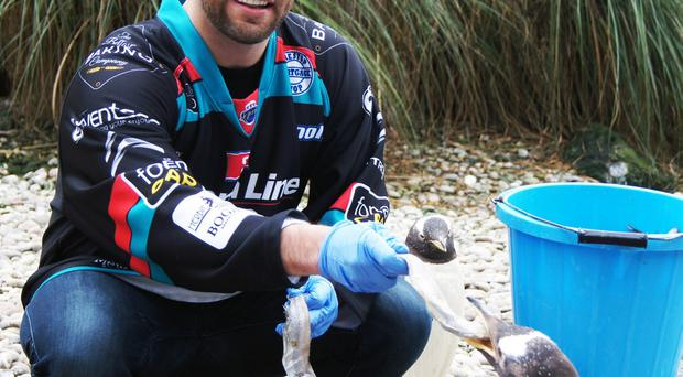 David Rutherford from Belfast Giants meets one of the baby penguin chicks