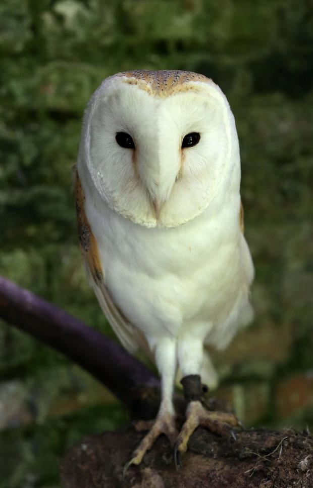 Seven barn owls seized by police will never be able to fly free again after they were kept in captivity by their previous owner, it has been claimed