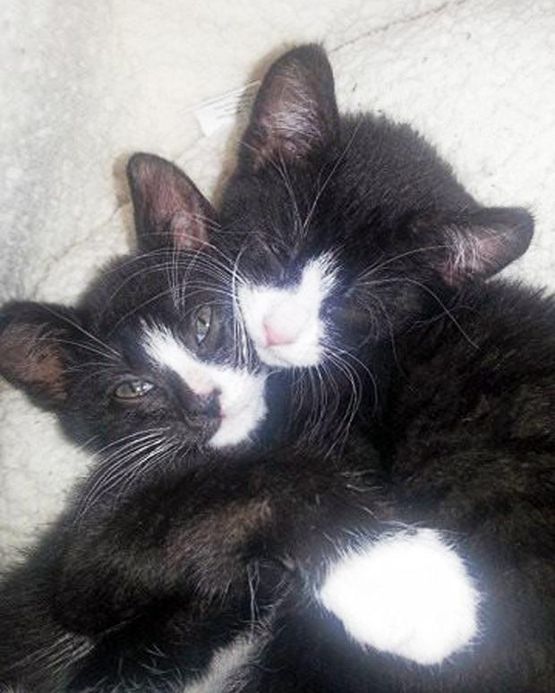 Archie and Oscar, the two cats a vet has said were poisoned