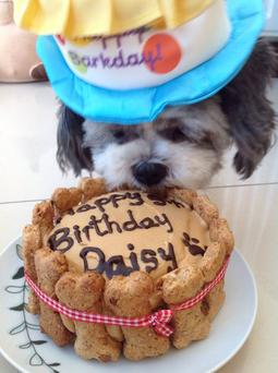 Lucky pooch Daisy tucks into birthday cake
