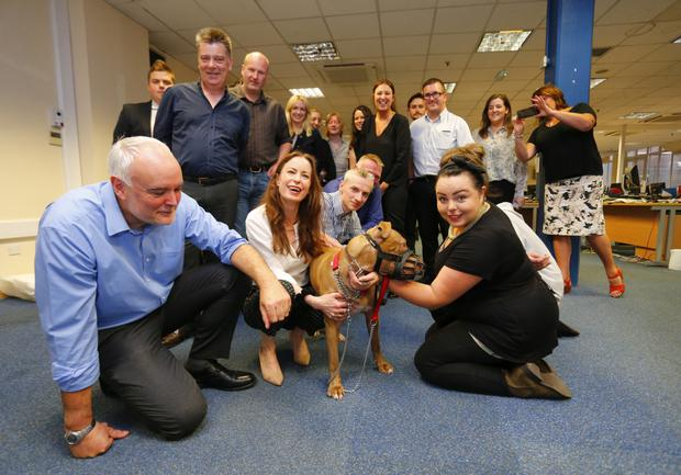 Hank the dog with owner Joanne Meadows (right) visits the Belfast Telegraph office to thank staff and Editor Gail Walker for assisting in his rescue