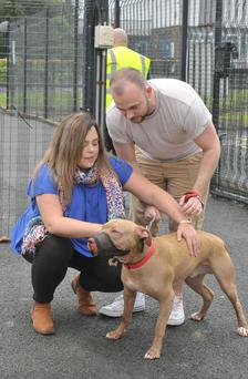 Hank being reunited with his owners Joanne Meadows and Leonard Collins last week