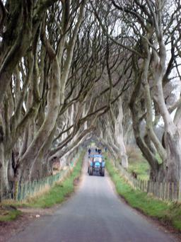 The Dark Hedges could soon be closed to protect the trees