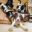 Meet the 10 little dogs who are recovering after they were left abandoned in a box in south Down