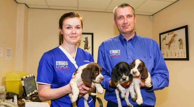 USPCA vets Deirdre Totten and Martin Dobbin with some of the puppies.