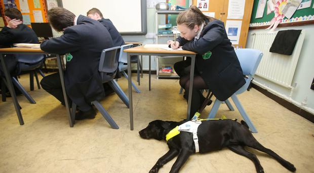 Corey with her guide dog Ida at school