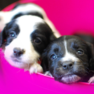Three of the pups that were found in a cardboard box by the roadside