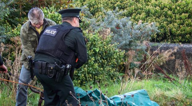 The remains of the stag that was on the loose in Newry, Co Down, being taken away yesterday