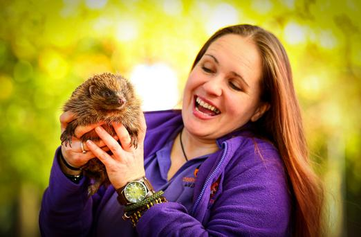 Debbie Nelson with some of her rescued hedgehogs