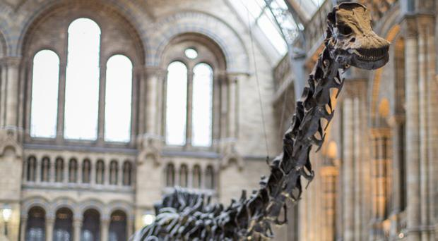 Dippy the Diplodocus will take in eight venues across the UK, starting from early 2018