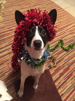 Theodore the collie is looking for a home this Christmas