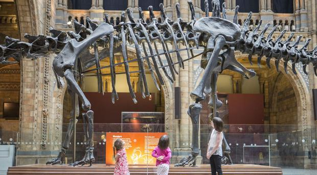 A team of six will start dismantling Dippy piece by piece - beginning with the tail - over three-and-a-half weeks.