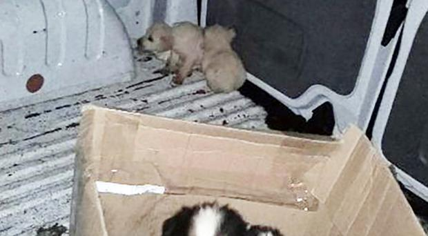 Joint effort: Four of recovered pups