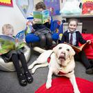 Pupils Amber Boyd, Evie Kelso and Paige Patterson with Angel the reading dog in Newtownards