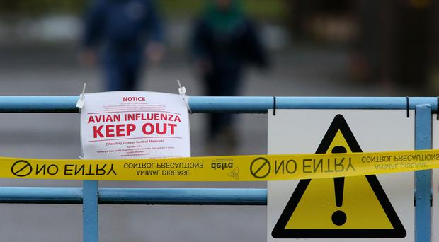 A sign warning of an avian influenza outbreak near Pontyberem, Carmarthenshire