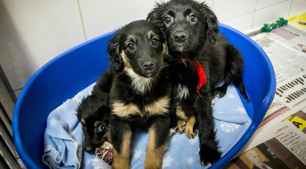 Puppies Jon, Daenerys and Sansa have all been booked and should be settled in their new homes within a week