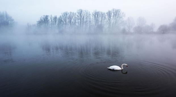 A swan on the River Trent near Holme Pierrepoint in Nottinghamshire