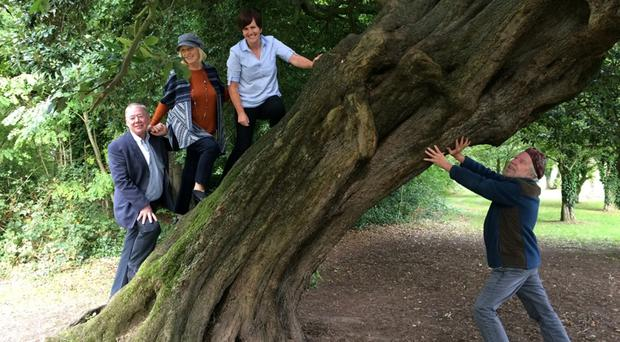 Musician Tommy Sands attempts to straighten NI Tree of the Year, 'Old Homer,' watched by (left to right) Paul Clerkin, Carole Murphy and Caitriona Ruane