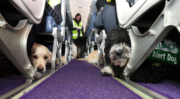 The dogs on board