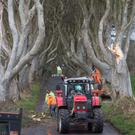 Workmen clear a fallen tree from the Dark Hedges