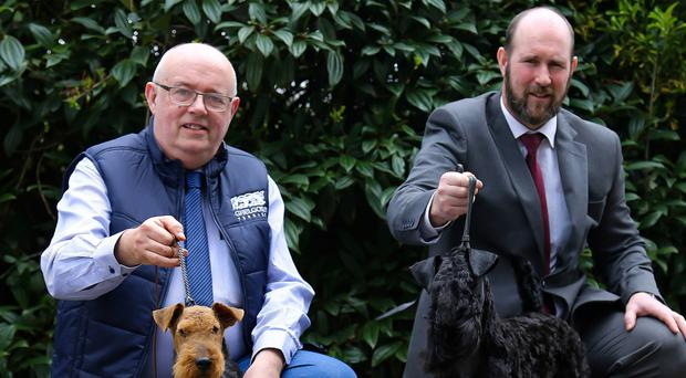 Darwin Martin (left) with Ifor who was 3rd in his class at Crufts and handler Paul Burke with Crufts Kerry Blue Junior Dog Winner, Gealgorm Dorcha Errigal, Erik, also owned by Darwin