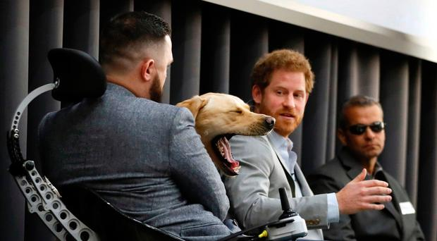 Cooper, an assistance dog belonging to Corporal Phil Eaglesham (left), yawns as Prince Harry talks at the conference yesterday