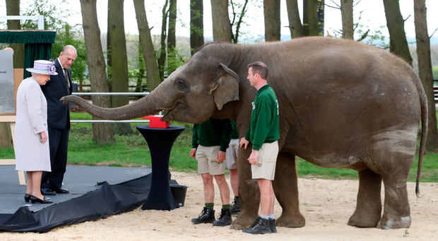 The Queen and Prince Philip feed Donna the elephant on a visit to the Elephant Centre at the ZSL Whipsnade Zoo in Dunstable